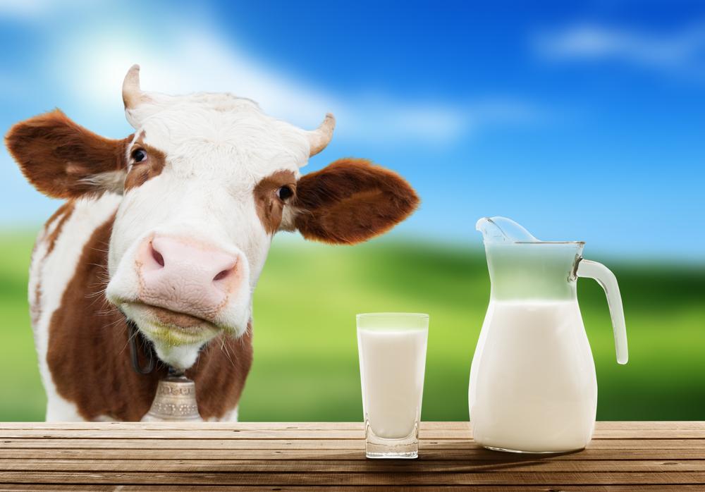 все о молоке и молочных продуктах фото картинки ухо является