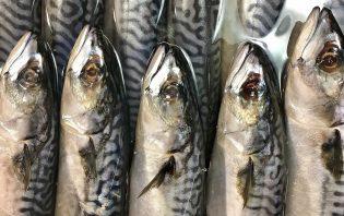 preg-food - Можно ли беременным рыбу?