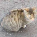 Рисунок профиля (Zheka0701)