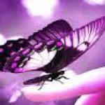 Рисунок профиля (Kaseri)